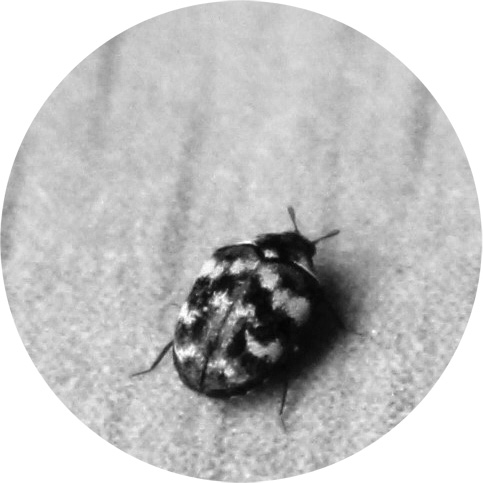 Textile Pest Control Services