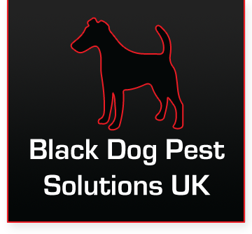 Black Dog Pest Solutions