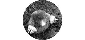 Mole Pest Control Services